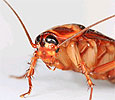 Тараканы в косметике