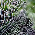 В человеческую кожу вживили паутину