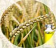 Масло красоты из зародышей пшеницы